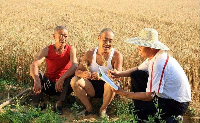 农民:人们的衣食父母